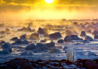 Courtesy of Churchill Wild, photo by Howard Sheridan