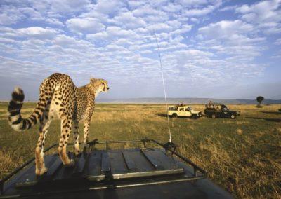 Best-of-7-Days-Safari-in-Serengeti-and-Ngorongoro-Crater