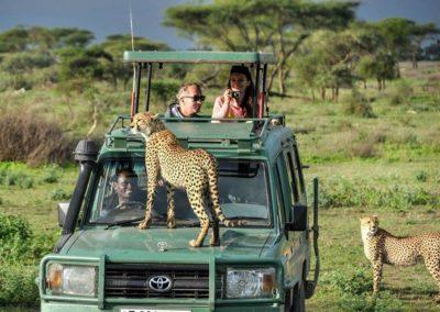 Safari-in-Manyara-Serengeti-and-Ngorongoro-Crater