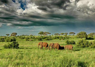 Tarangire-elephants-scenery-region