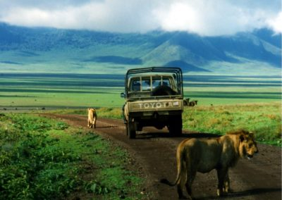 lions_in_ngorongoro_on_the_road