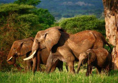 tarangire-national-park-elephants