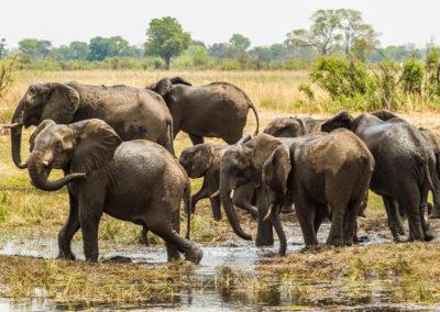 Elefantenherde-im-Caprivi-Namibia