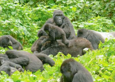 habimanya-gorilla-family