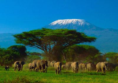 kenia-el-mitico-parque-nacional-de-amboseli-2-311