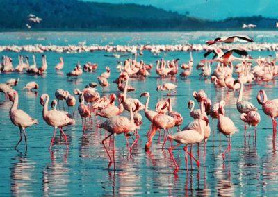 pink-flamingo-1484781_960_720
