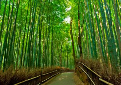 sagano-arashiyama-walking-tour