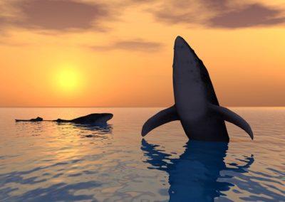 el-santuario-de-la-ballena-gris-en-baja-california