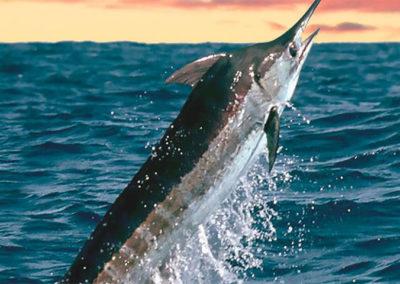 pesca-deportiva2